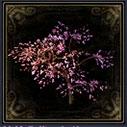 特效盆栽·红梅